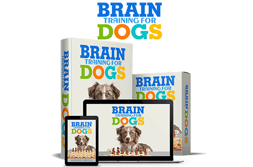 brain-training-for-dogs #SuperchargeDeals